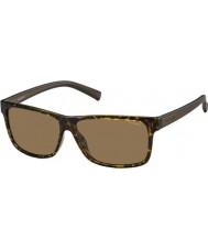 Polaroid Mens pld2027-m31 s ig Habana gafas de sol polarizadas marrones